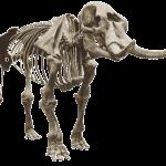 Mastodon NYS Museum